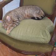 HECATE - F - Née le 19/05/2012 - Adoptée en Octobre 2012