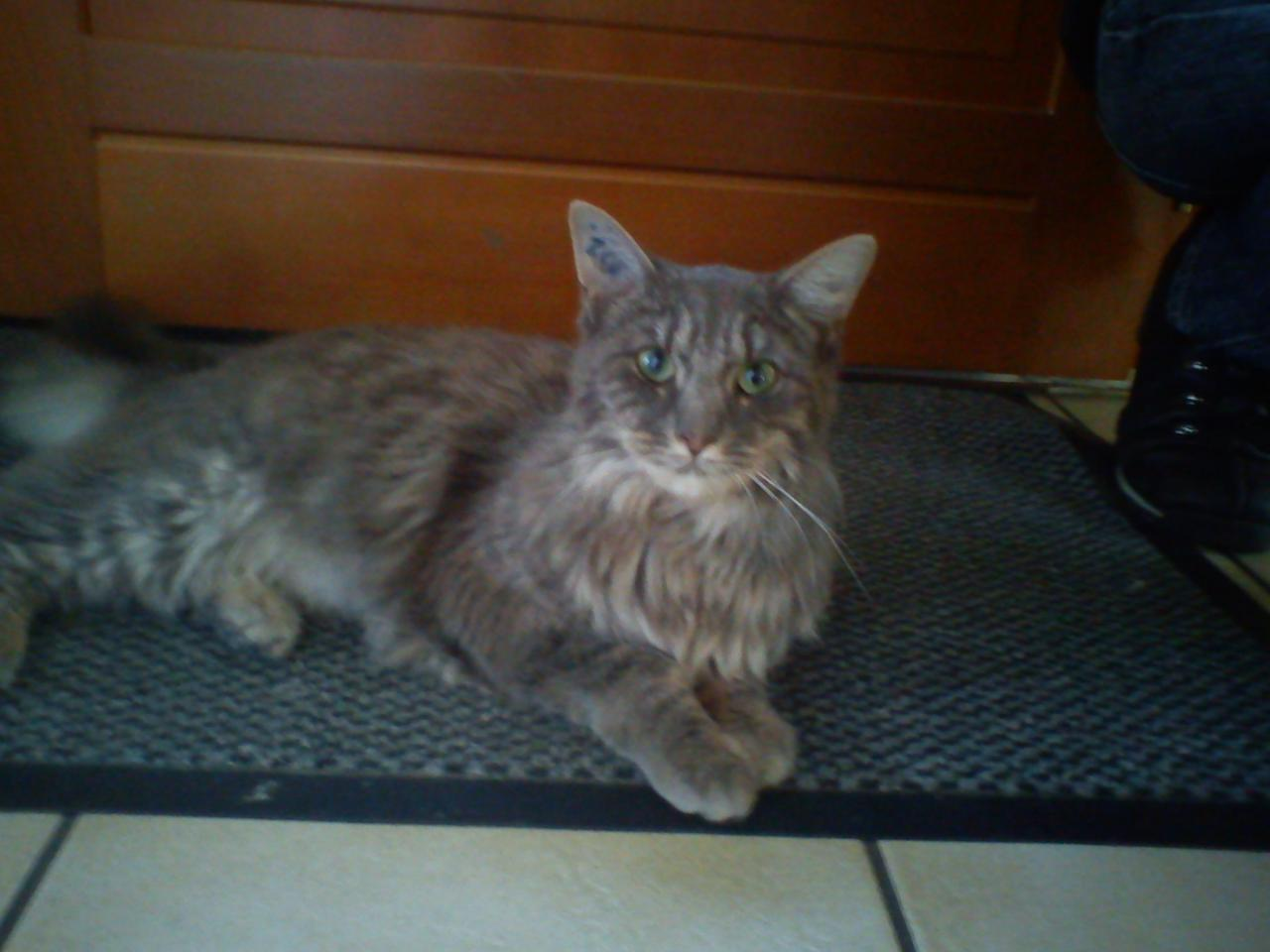 HEIDI - F - Née le 12/03/2011 - Adoptée en Mai 2012