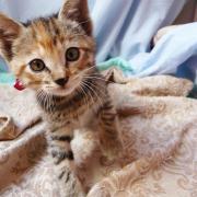 HELEE - F - Née le 28/03/2012 - Adoptée en Juin 2012