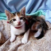 HELIE - F - Née le 28/03/2012 - Adoptée en Juin 2012
