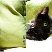 HELIEL - M - Né le 25/04/2012 - Adopté en Novembre 2012