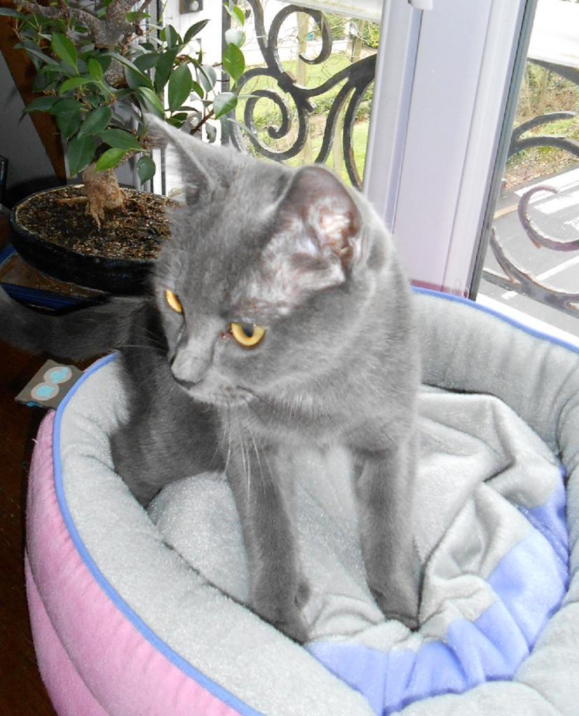 HELINETTE - F - Née le 01/07/2012 - Adoptée en Novembre 2012