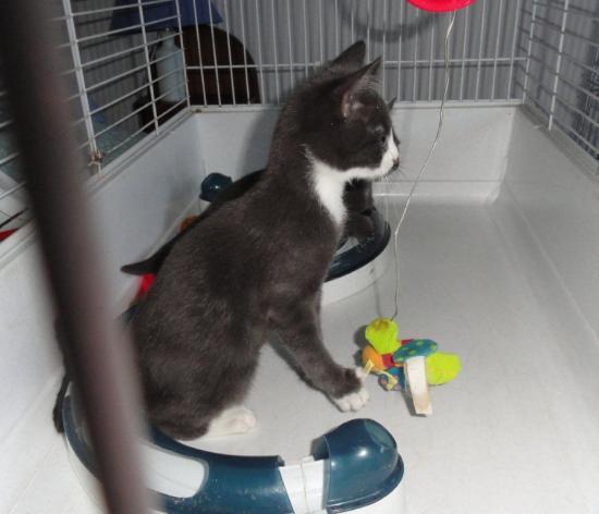 HELIS - M - Né le 15/06/2012 - Adopté en Octobre 2012