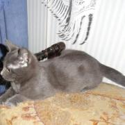 HELISIA - F - Née le 15/06/2012 - Adoptée en Octobre 2012