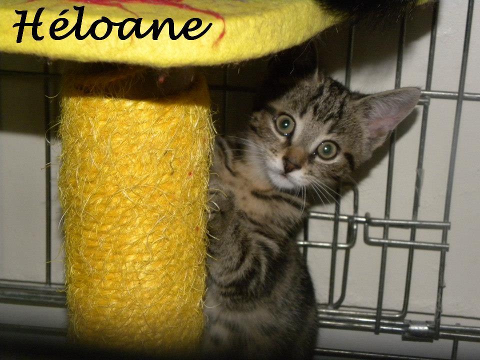 HELOANE - Née le 20/07/2012 - Adoptée en Janvier 2013