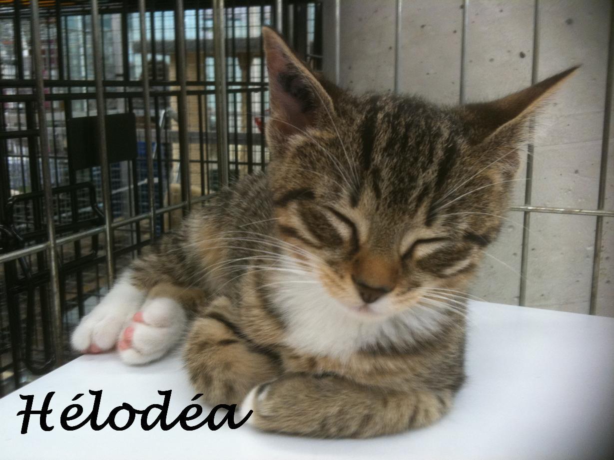 HELODEA - F - Née le 20/07/2012 - Adoptée en Novembre 2012