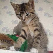 HELOI - M - Né le 01/05/2012 - Adopté en Aout 2012
