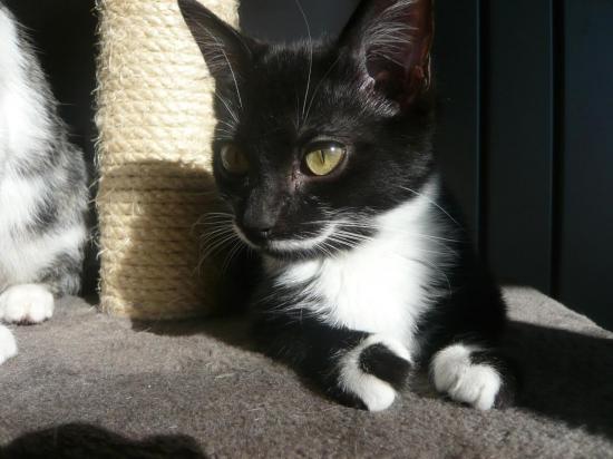 HELVIS - M - Né le 15/07/2012 - Adopté en Decembre 2012