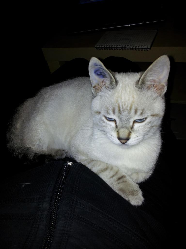 HELYA - F  - Née le 15/08/2012 - Adoptée en Decembre 2012