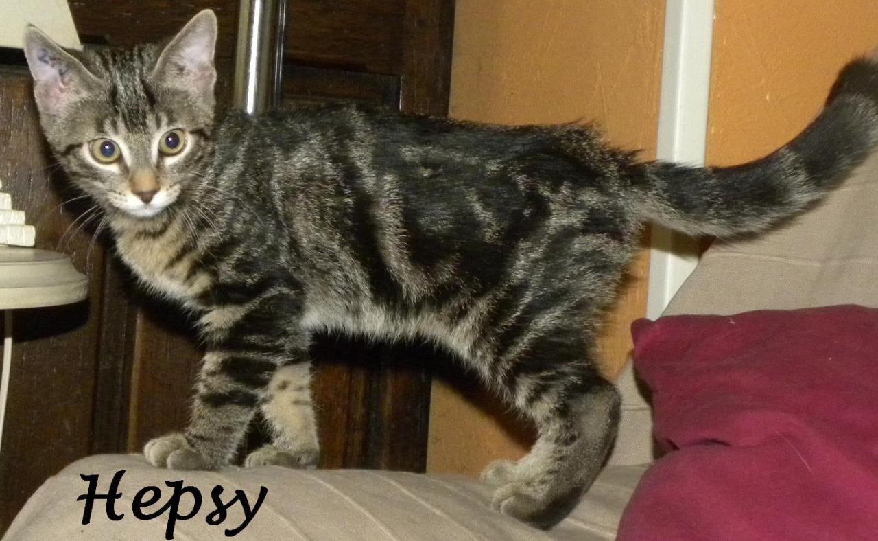 HEPSY - M - Né le 20/07/2012 -  Adopté en Novembre 2012