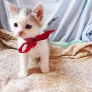 HERISSON - M - Né le 01/04/2012 -  Adopté en Juin 2012