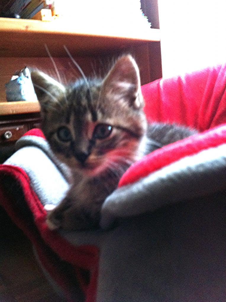 HEROS - M - Né le 14/09/2012 - Adopté en Mars 2013