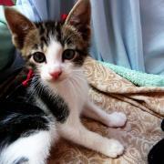 HERVIN - M - Né le 28/03/2012 - Adopté en Juin 2012