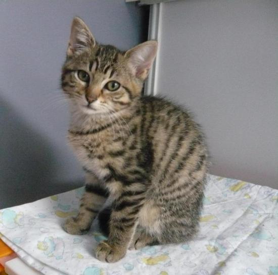 HETAL - M - Né le 01/04/2012 - Adopté en Octobre 2012