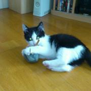 HINDIANNA - M - Né le 09/04/2012 - Adopté en Juillet 2012