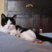 HIRO - M - Né le 11/02/2012 - Adopté en Juillet 2012