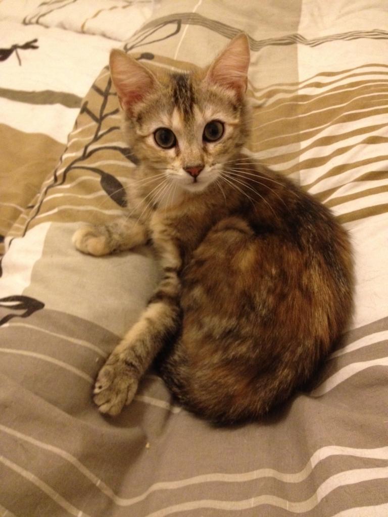 HOLALA - F - Né le 02/01/2012 - Adoptée en Avril 2012