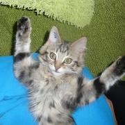 HOLIKA - F - Née le 01/08/2012 - Adoptée en Decembre 2012