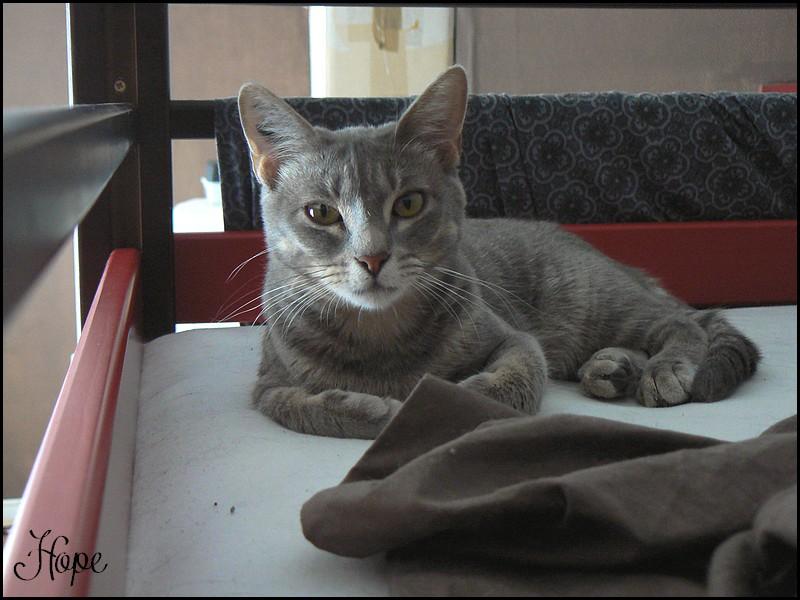 HOPE - F - Née le 01/09/2011 - Adoptée en Novembre 2012