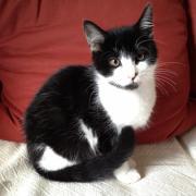 HORKY - M - Né le 14/06/2012 - Adopté en Decembre 2012