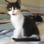 HOUPIE - F - Née le 01/06/2012 - Adoptée en Octobre 2012