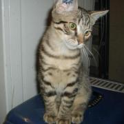HOUPLA - M - Né le 01/06/2012 - Adopté en Septembre 2012