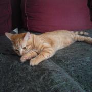 HOUSTON - M - Né le 01/04/2012 - Adopté en Octobre 2012
