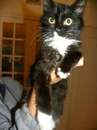 HOZ - m - Né fin juillet 2012 - Adopté en Novembre 2012
