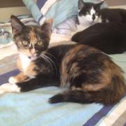 HOZIE - F - Née le 03/06/2012 - Adoptée en Octobre 2012