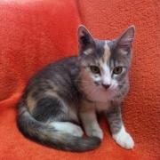 HULOTTE - F - Née en mai 2012 - Adoptée en Septembre 2012