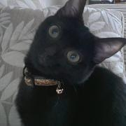HYAEL - F - Née le 15/09/2012 - Adoptée en Decembre 2012