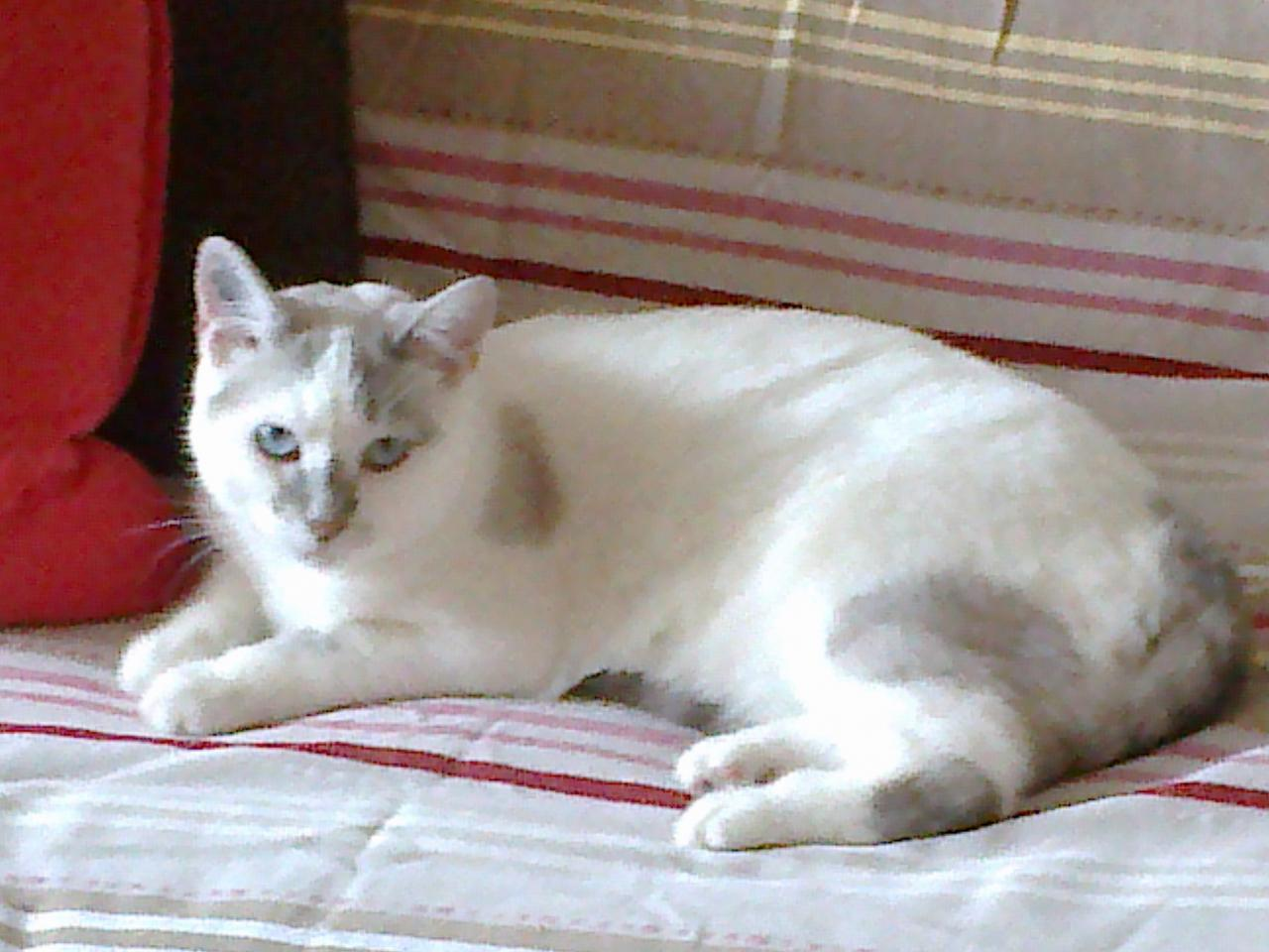 IANA - F - Née le 01/07/2012 - Adoptée en Avril 2014