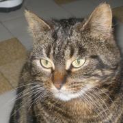 IBIZA - F - Née en Janvier 2012 - Adoptée Decembre 2013