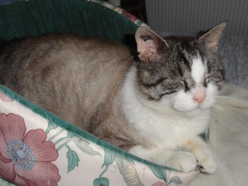 ICARE - M - Née janvier 2008 - Adopté en Fevrier 2012