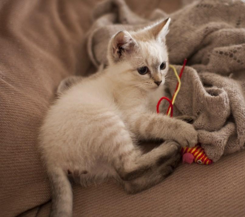 IDRISS - M - Né le 25/05/2013 - Adopté en Septembre 2013