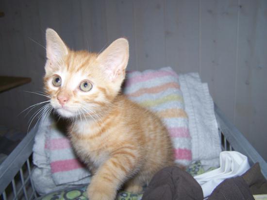 FOLKER - M - Né le 12/04/2010 - Adopté en août 2010.