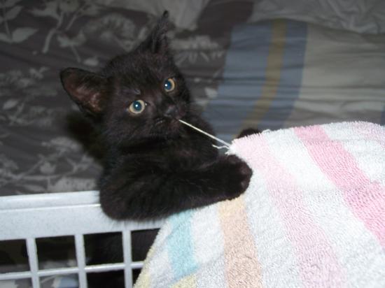 FALCO - M - Né le 12/04/2010 - Adopté en juillet 2010