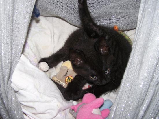 FLOYD - M - Né le 12/04/2010 - Adopté en juin 2010.