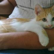 GADZART - M - Né le 15/04/2011 - Adopté en Aout 2011