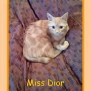 DIORELLA - F - Née le 15/07/2008 - Adoptée en décembre 2008