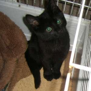 DANIA - F - Née en août 2008 - Adoptée en 2008