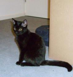 EURIDICE - F - Née le 15/04/2009 - Adoptée en décembre 2009