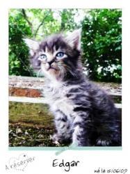 EDGAR - M - Né le 15/06/2009 - Adopté en août 2009