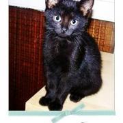 E.T - M - Né en Juillet 2009 - Adopté en septembre 2009