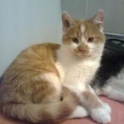 FLOUF -M - Né le 15/08/10 - Adopté en janvier 2011