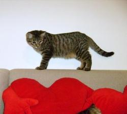 ECTOR - M - Né le 15/04/2009 - Adopté en décembre 2009