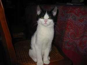 DIABLESSE - F - Née le 15 juillet 2008 - Adoptée en 2008