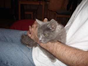 DIESEL - F - Née le 01-08-2008 - Adoptée en 2008