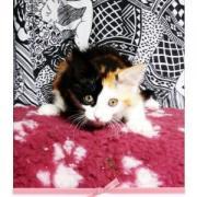 ECHALOTTE - F - Née le 04/05/2009 - Adoptée en août 2009