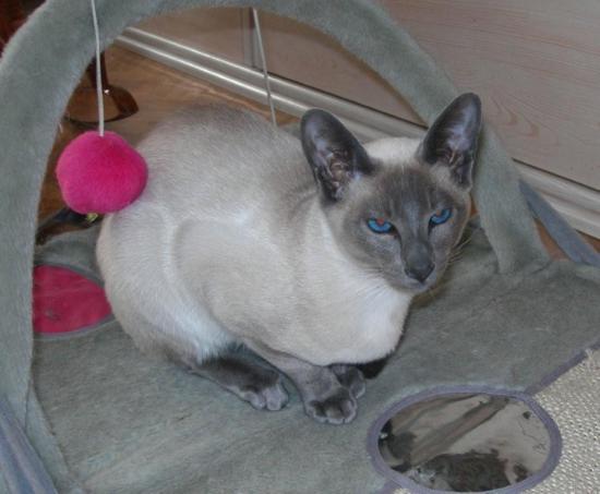 DAFFIE - M - Né le 29/07/2008 - Adopté en mai 2009